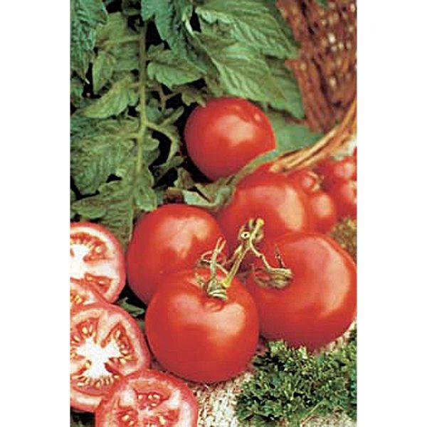 Early Girl F1 Hybrid Tomato