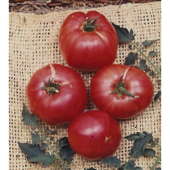German Johnson Heirloom Tomato