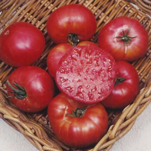 Mortgage Lifter Heirloom Tomato