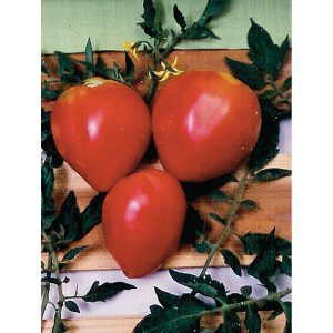 Pink Oxheart Tomato Seed