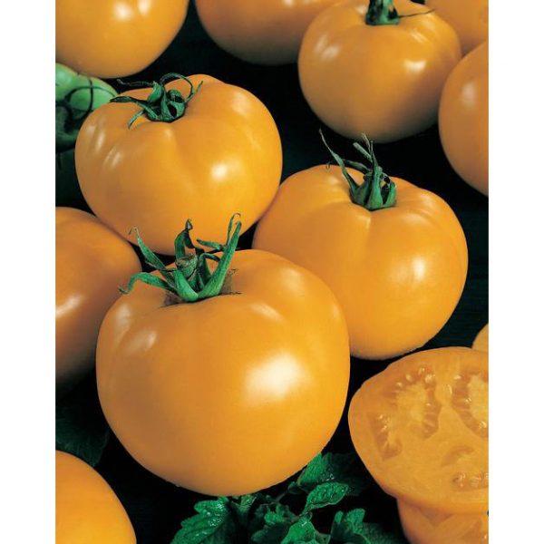 Sunny Boy F1 Hybrid yellow tomato