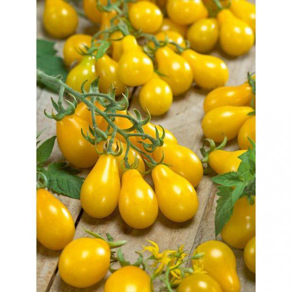Yellow Pear Heirloom Cherry Tomato