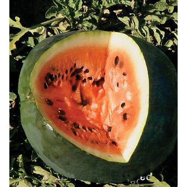 Black Diamond Watermelon