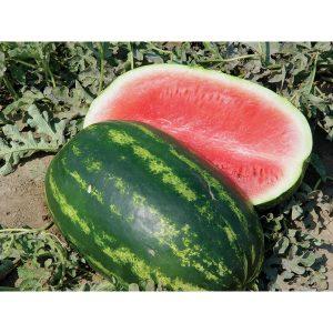 Comadre F1 Hybrid Watermelon