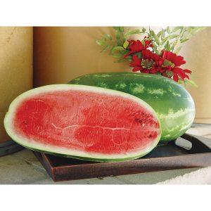 Waddie F1 Hybrid Watermelon