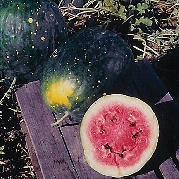 Moon & Stars, Red Watermelon