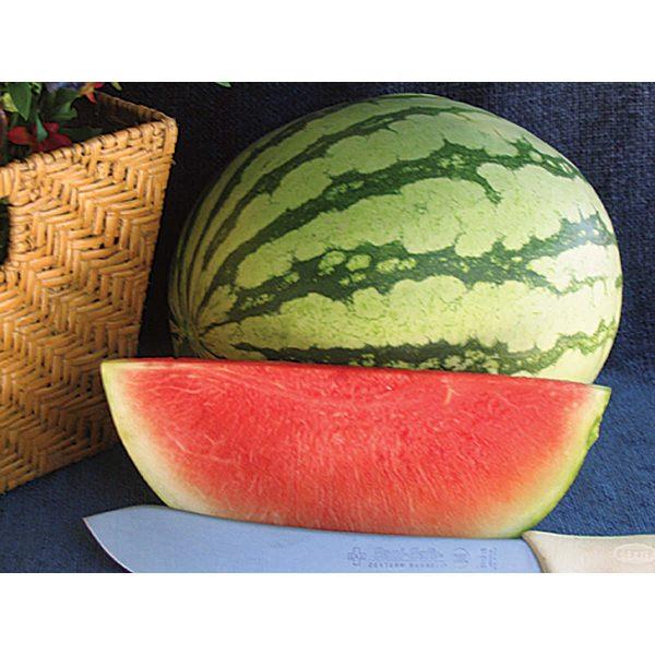 Pee Dee Sweet F1 Hybrid Seedless Watermelon
