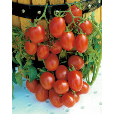 Crovarese Grape Type Tomato seeds from our Italian Gourmet Seed Collection