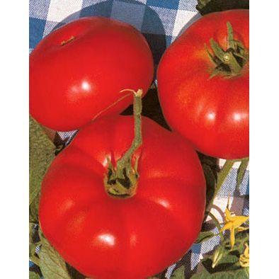 Marmande Italian Heirloom Slicing Tomato from our Italian Gourmet Seed Collection