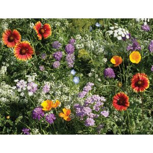 Beneficial Bug Wildflower Mix