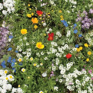 Super-Short Wildflower Mix