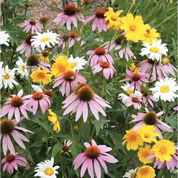 Shade Wildflower Mix