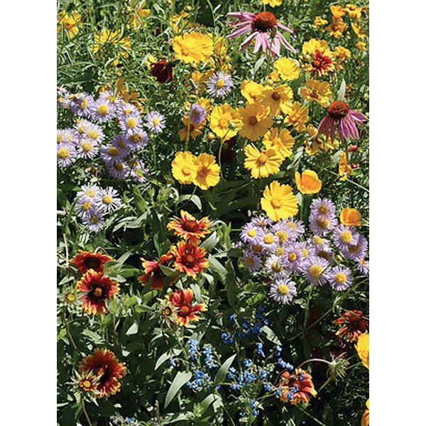 Bee Feed Wildflower Mix Pollinator