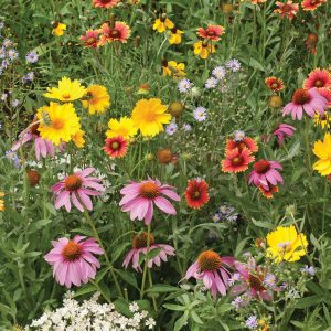 Honeybee Wildflower Mix