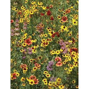 Eastern Pollinator Wildflower Mix