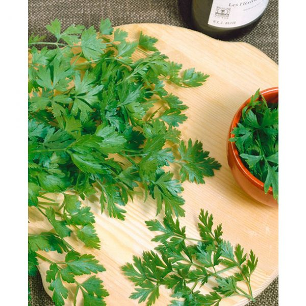 Italian Dark Green Parsley Seeds