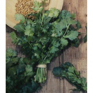 Slow Bolting Coriander