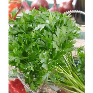 Certified Organic Plain Leaf Parsley Seeds