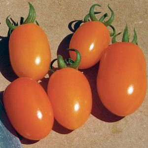 Huey F1 Hybrid Grape Tomato