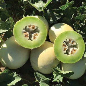 Dewey F1 Hybrid Melon