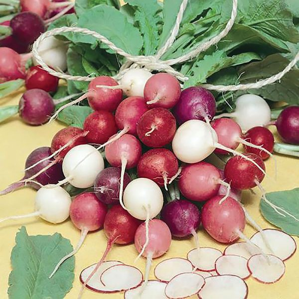 Easter Egg Summer Radish