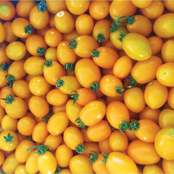 Sun Bliss F1 Hybrid Tomato Seeds