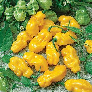 Sweet Yellow Habanero Pepper Seeds