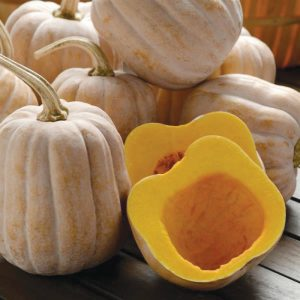 Autumn Frost F1 Hybrid Winter Squash