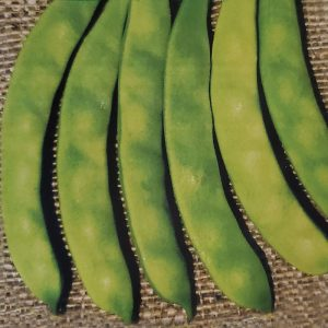 Albenghino Pole Snap Bean