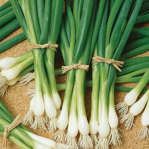 Evergreen Long White Onion Seeds