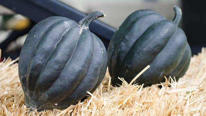 Storing Winter Squash After Harvest