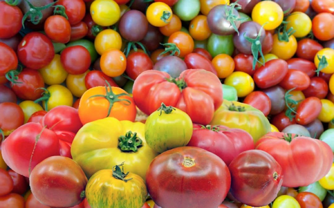 Tomatoes from Seed to Sauce – Part 2 – How to Choose a Tomato Variety