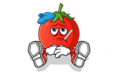 Tomatoes – From Seed to Sauce Part 5 – What's Wrong With My Tomato Plant – Problems to Watch for Now and Later.
