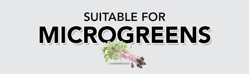 Seeds for Growing Microgreens